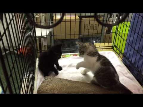 子猫ちゃんと子猫ちゃん