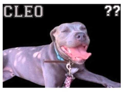 Bill Burr S Dog
