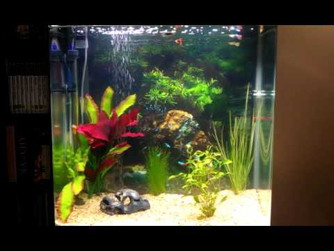 Neon Tetras And Guppies Tetras 5 Male Guppies