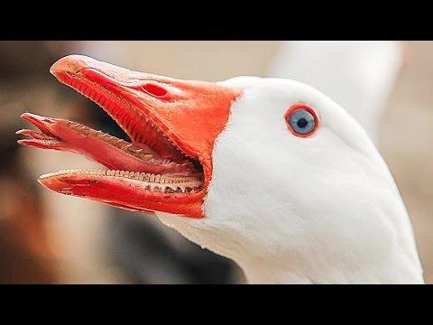 10 Scheinbar Harmlose Tiere - Die Dich Töten Können Teil 1