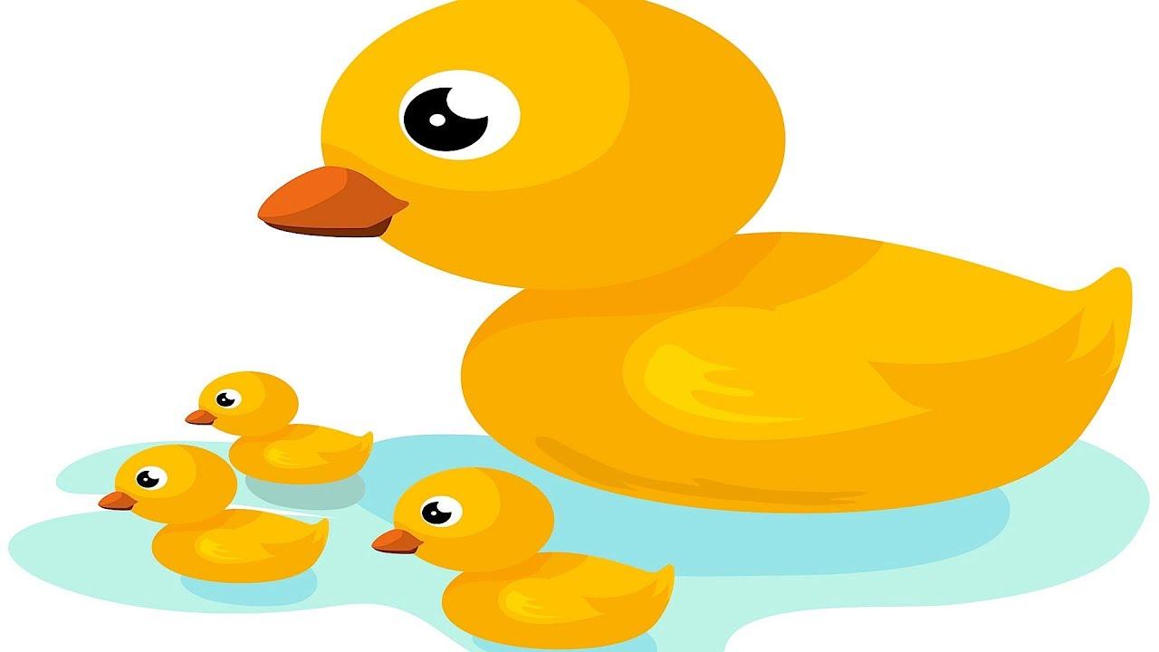 5 Little Ducks   Kids' Songs - YouTube