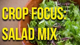 CROP FOCUS: Salad Mix