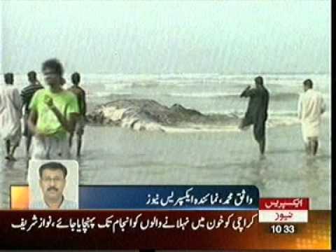 Karachi:Died Fish In  Sea View Express News.mpg