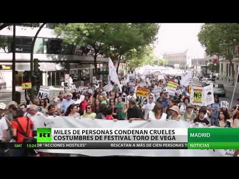 España: Miles de personas condenan las crueles costumbres del festival Toro de Vega