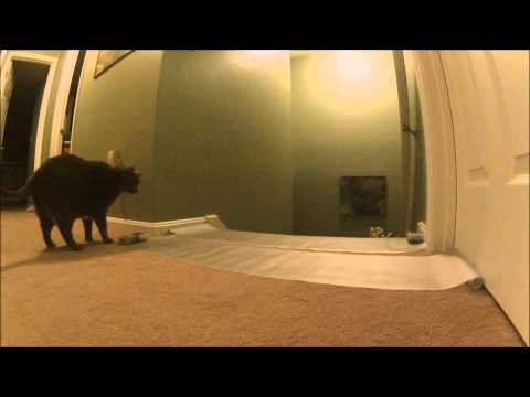 Scat Mat ~ Pip & Munchkin video