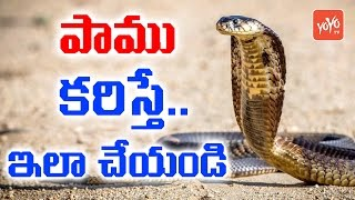 పాము కరిస్తే ..ఇలా చేయండి | Useful Home Remedies For Snake Bite | First aid For Snake Bite | YOYO TV