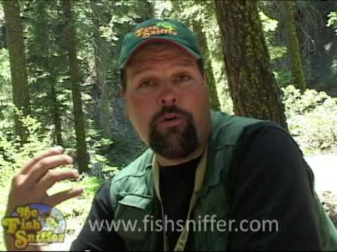 Fly Fishing Rainbow Trout on the Yuba ~ Fish Sniffer TV Ep. 1