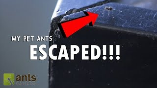 OMG! My Pet Ants Escaped Into My Home