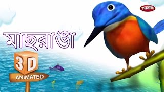 Kingfisher Rhyme in Bengali | বাংলা গান | Bengali Rhymes For Kids | 3D Bird Songs in Bengali | Poems