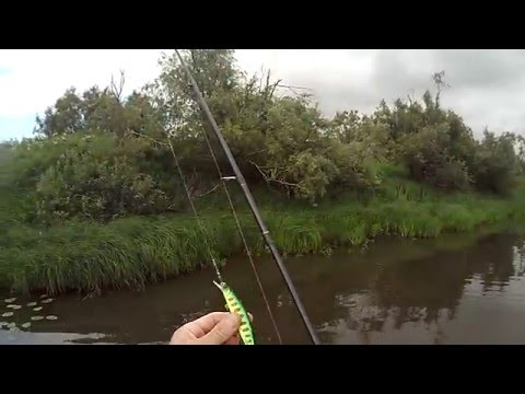 видео о рыбалке на реке тым