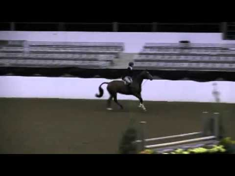 Video of ARGENTINA ridden by JORDAN GILCHRIST from ShowNet!