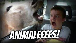 Animales Graciosos Y Chistosos - Videos De Risa 2015