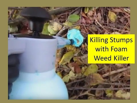 Clearing Out Woody Invasive Trees and Brush (Buckthorn) and Treating with Foam Herbicide