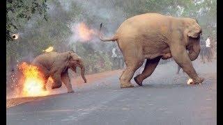 India award for baby elephant photo,The annual Sanctuary Wildlife Photography Awards, West Bengal