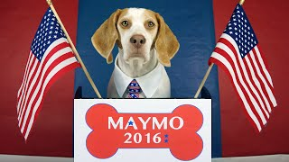 Maymo the Dog Runs for President: Maymo 2016