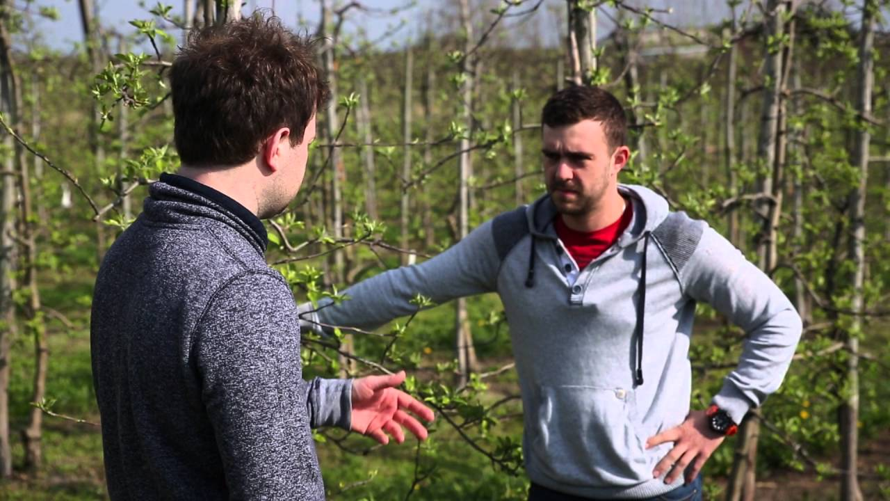 forum sadownicze, wapń w roślinach dowiedz się o co chodzi, uprawa jabłek, kwitnienie jabłoni