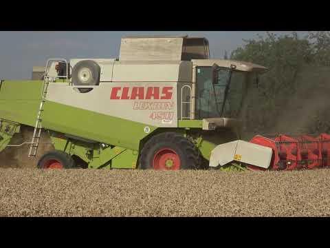 Weizenernte in der Landwirtschaft