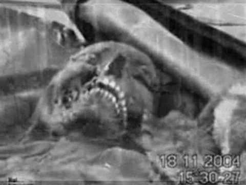 Kgb ufo krash et skull russian alien x files film 16 mm original