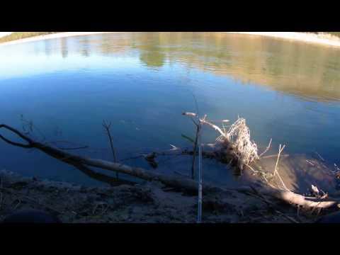 видео рыбалка на кубани фидером