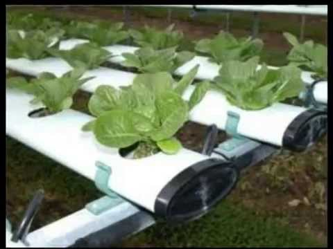 Information On Hydroponic Gardening