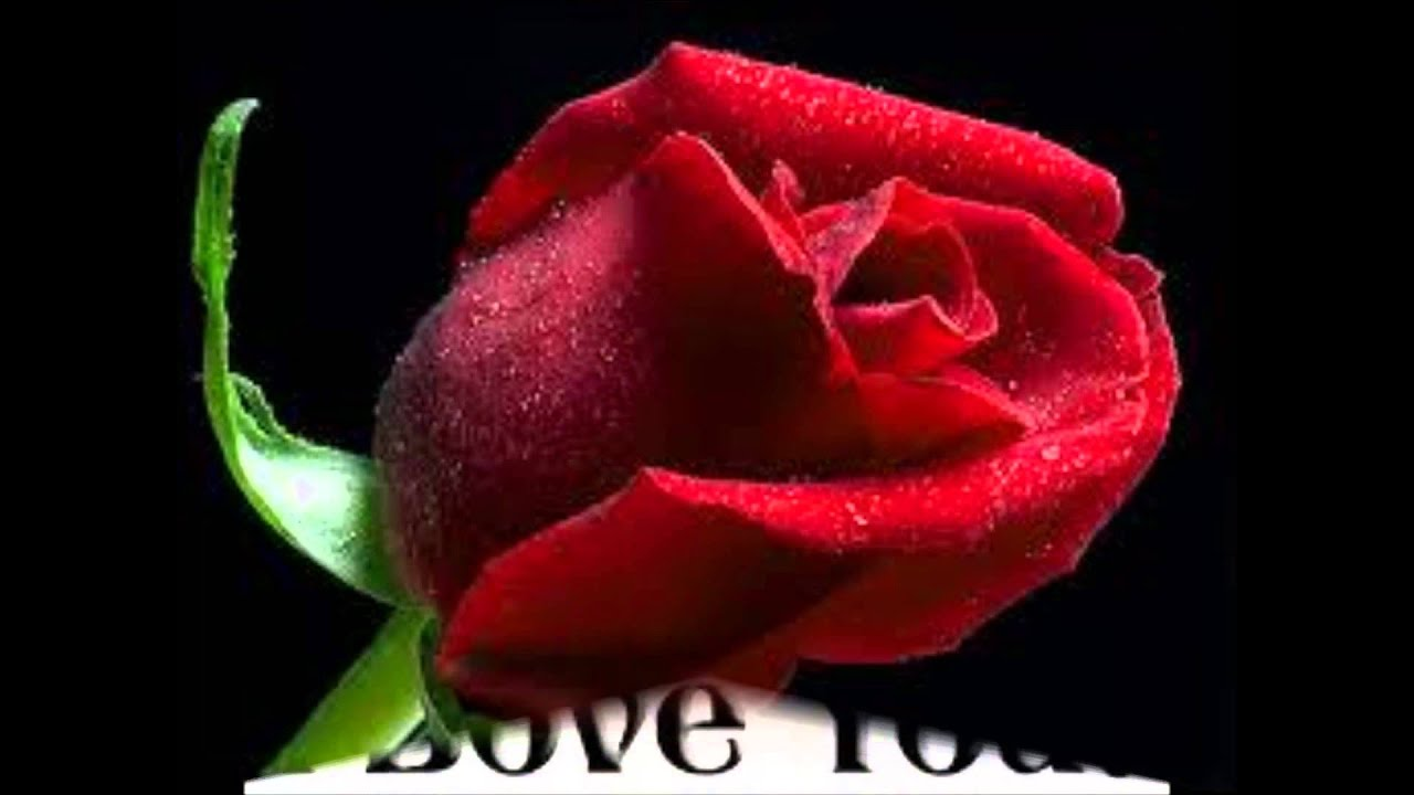 i Love Hamza Pic i Love You Hamza es Samti