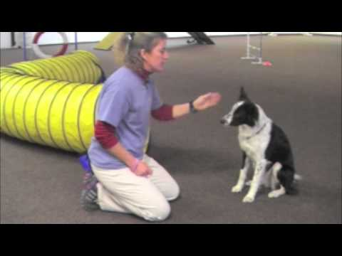 Villa La PAWs - Cool Dog Tricks - Wave Goodbye