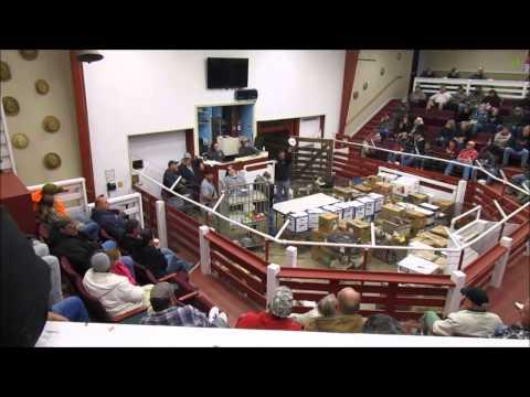 Westminster Livestock Auction 4-9-2015