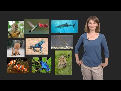 Melina Hale (U. Chicago) 1: The Evolution of Neural Circuits & Behaviors: Introduction to Evolution