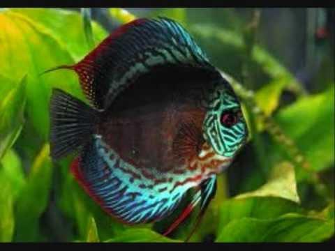 Top ten tropical fish youtube for Best pet fish
