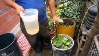 Abono organico: Tecnica Eco balde