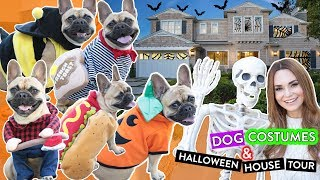 My Dog Tries On Halloween Costumes!! + Halloween House Tour!