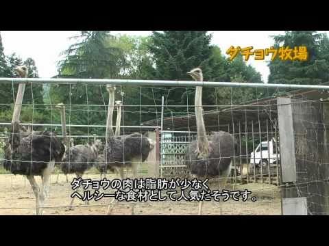 揖斐川町の特産品 ~ダチョウ肉・さかうちパッションフルーツ~