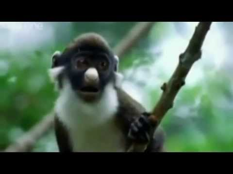 What's Your Plan - Funny Animals - Punjabi Dubbed video