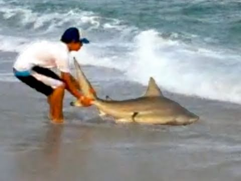 Shark Fishing on the Surf