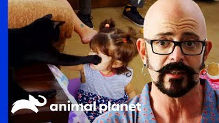 """""""Unpredictable"""" Cat Keeps Clashing With Energetic Toddler 
