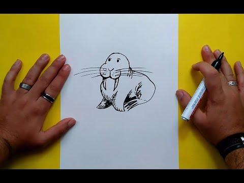 Como dibujar un leon marino paso a paso | How to draw a sea lion