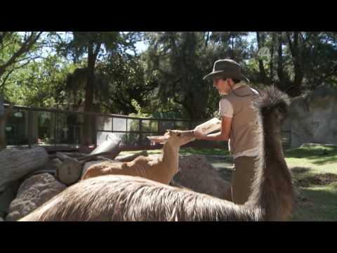Desde el Zoológico: Visitando a los 'chamacos' del Zoológico Guadalajara