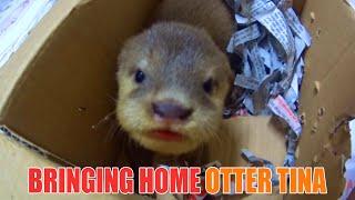 The Most Beautiful Otter Ever   Quà Tặng Rái Cá Đẹp Nhất Thế Giới - Tiun