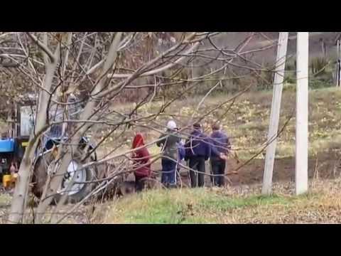 село Медвин: местные обитатели: кролики, утки, собачки, куры