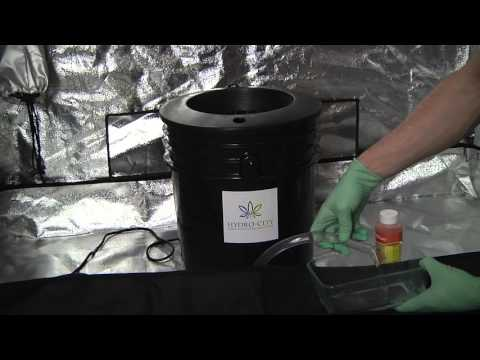 Hydro City: Setting up your DWC Hydroponic Bucket