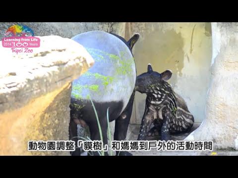 貘樹快卸童裝-彩色漸轉黑白 Malayan Tapir Baby Coat Gradually Fade Away