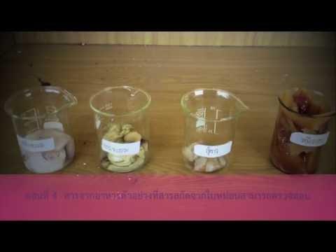 โครงงานวิทยาศาสตร์ โรงเรียนชัยภูมิภักดีชุมพล (2555)