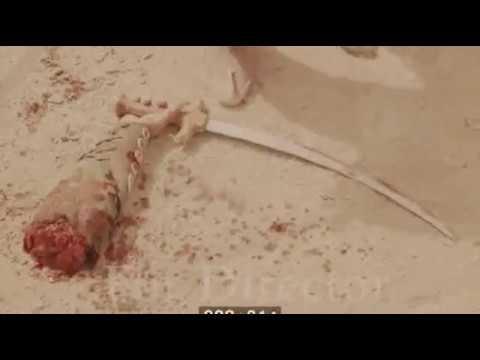 Death Of Al-Abbas | قتال و استشهاد العباس
