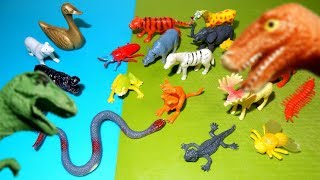 Animal Figurines, Fun Facts, and Dinosaur Visitors