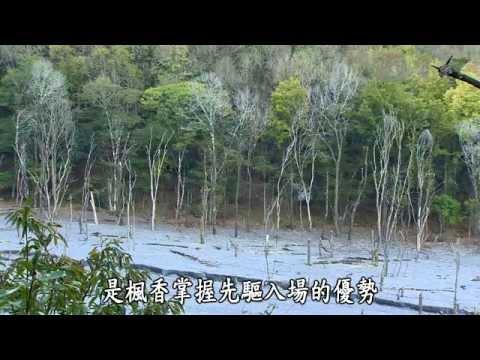 大愛-發現-20150103 秋意森林 - 奧萬大