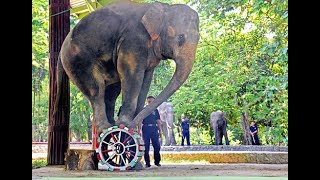 download lagu Elephant Show Taman Safari Cisarua Indonesia Part 2 - gratis