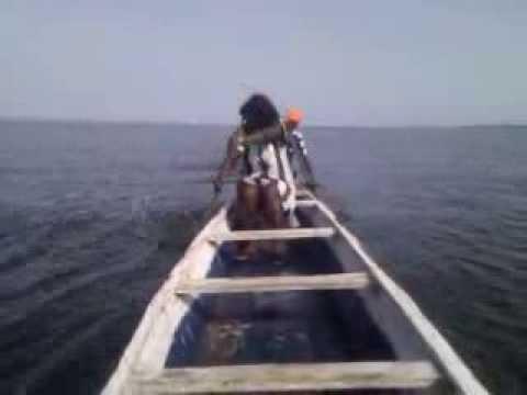 Tilapia Fish Farming In Ghana   Fast Growing Tilapia Fingerlings   Fish Farm Training   Lake Volta