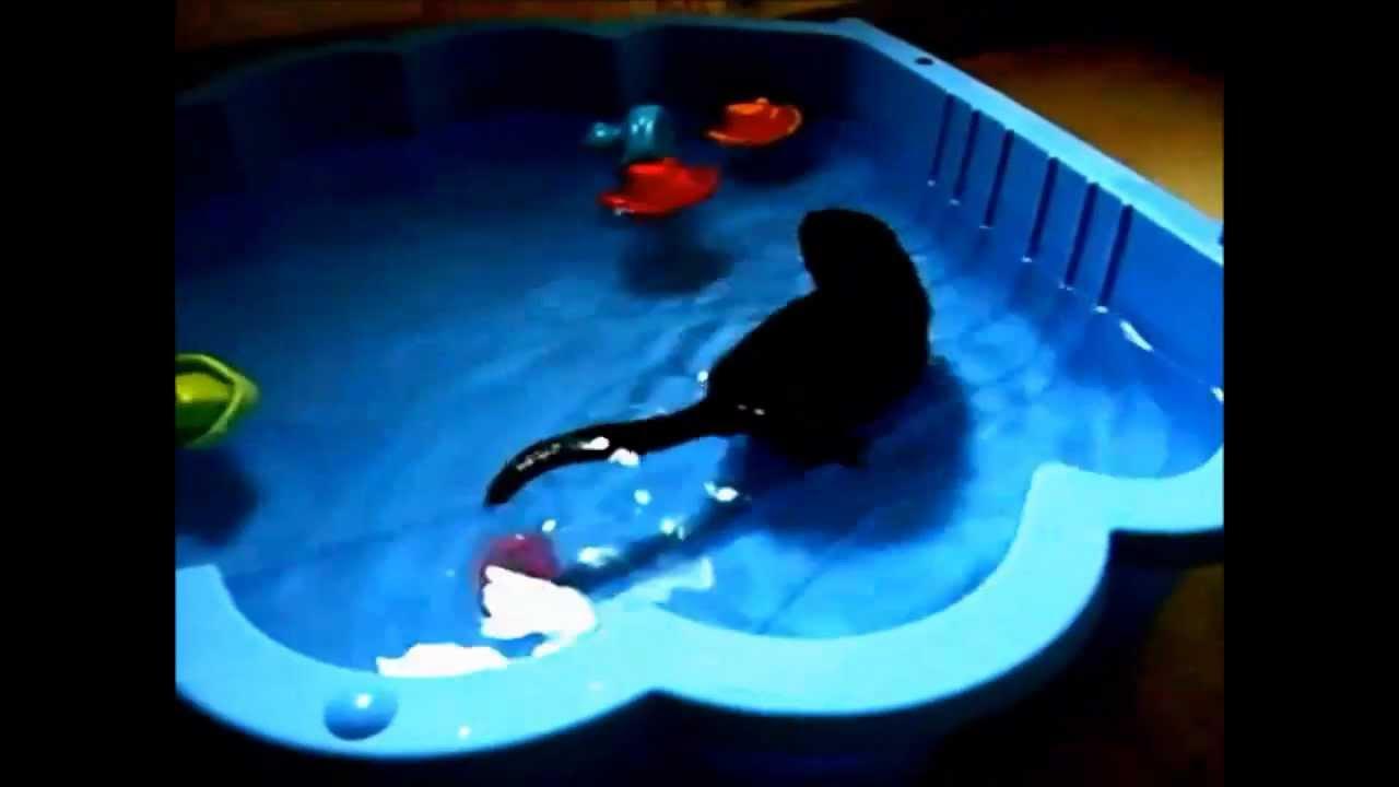 bretzel mon vison b b dans la piscine coquillage juin