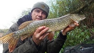 Dead-baiting for pike on the Severn and Shropshire stillwater