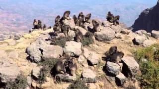 Discover Semien Mountains , The Roof of Africa - የሰሜን ተራራ፤የአፍሪካ ጣራ::